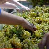 Groote Post Vineyards and Winemaking