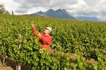 The Villiera Vineyards