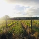 South African Wine Industry