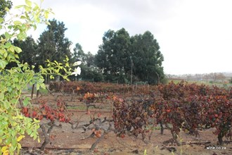 Old vineyards